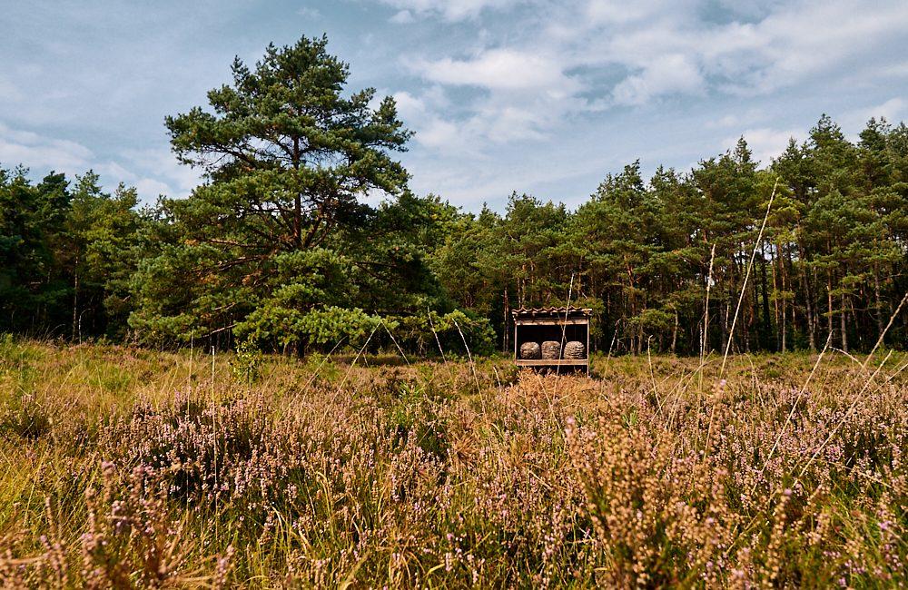 Familienreise, Lüneburger Heide